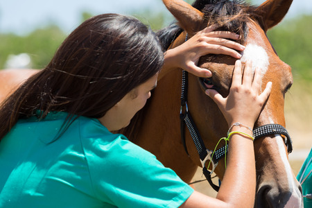 Veterinary horses on the farm conducting a review in one eye Stock Photo