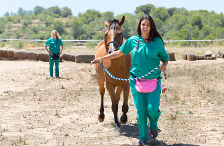 sickly: Horse veterinarian performing a walk test galloping Stock Photo