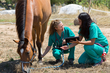 inquiry: Veterinary horses on the farm making an inquiry with the tablet