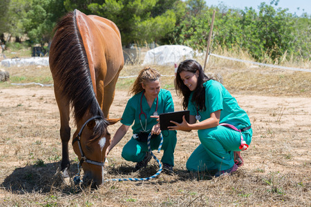 Veterinary horses on the farm making an inquiry with the tablet