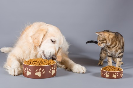 Dog and cat eating dry food in bowls