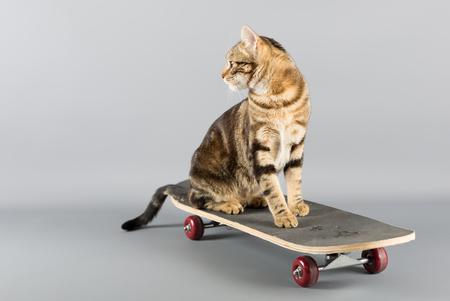 Cat sitting on top of a skateboard looking back Фото со стока