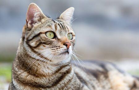 Close-up of a cat lying resting Standard-Bild