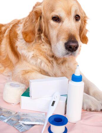 Golden retriever with his medications in a veterinary practice Standard-Bild