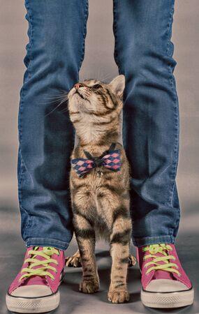 Small cat between the legs of its owner Standard-Bild