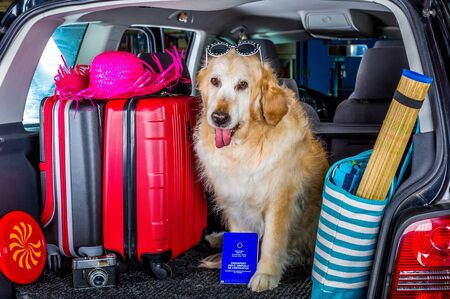 Golden Retriever in the boot of the car ready to leave home Standard-Bild