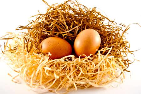 origen animal: dos huevos se extiende sobre la paja de las que pueden aparecer los pollos