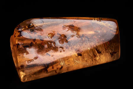 Horizontal close up of polished piece of amber, fossil resin with several insects isolated on black background. Stock Photo