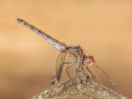 Dragonfly perched on a twig