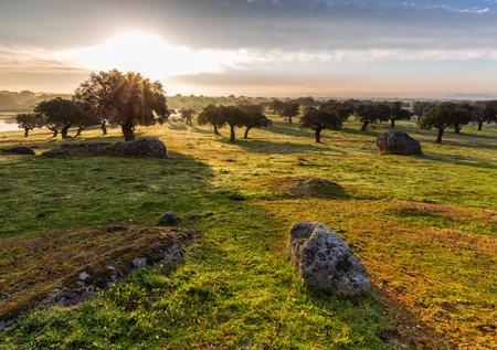 dehesa de Arroyo de Luz의 새벽. Extremadura. 스페인.