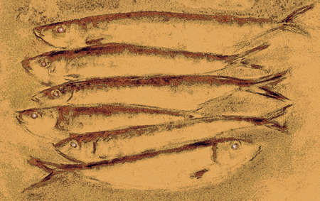 sardine: illustration representing sardines, from a drawing