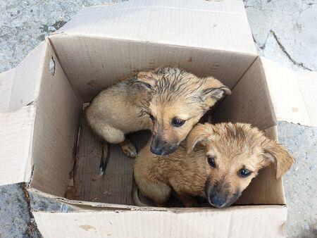 Dos cachorros callejeros en una caja de cartón. Foto de archivo
