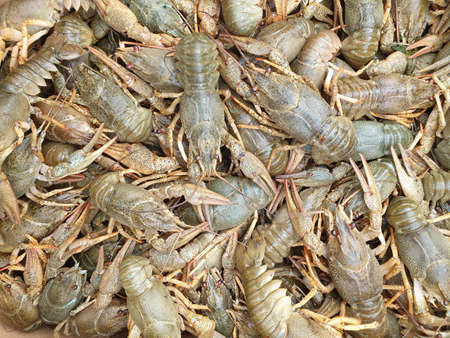 many live crawfish close-up, blank or texture