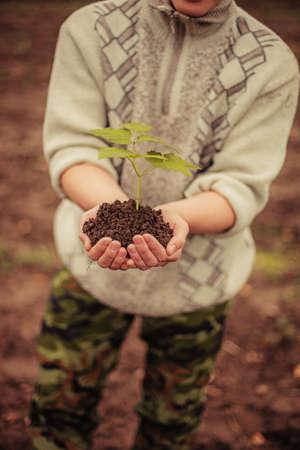 plantando un arbol: Gardener plantar un �rbol