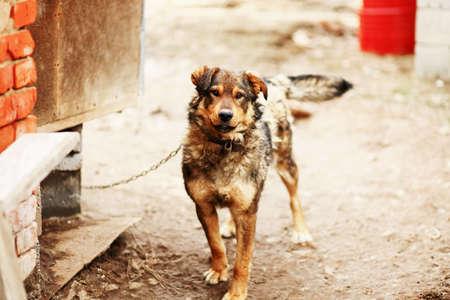sheds: Portrait of a dog that sheds fur.