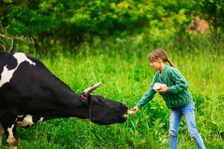 children cow: Children playing with a cow in the village. Stock Photo