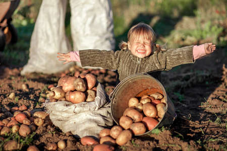 dig: The Children dig up the potato crop.