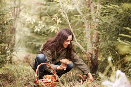 gathers: Young woman gathers mushrooms in the forest.