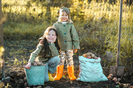 The Children on the harvest of potatoes. Stock Photo