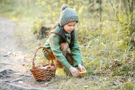 Children walking in the forest and gather mushrooms. Stock Photo