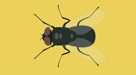 Isolated Vector Illustration of a Fly Иллюстрация