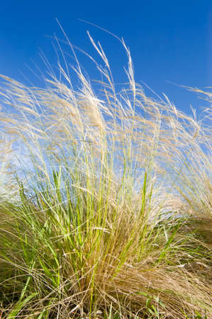 green grass against blue sky photo