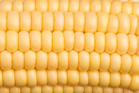 Corn Texture Background Stock Photo - 3259368