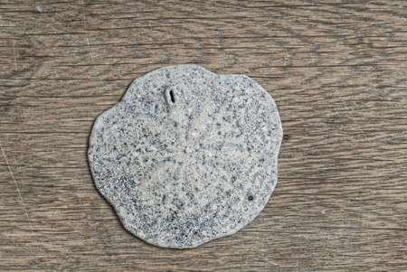 sand dollar: Fossil Sand Dollar on Wooden table