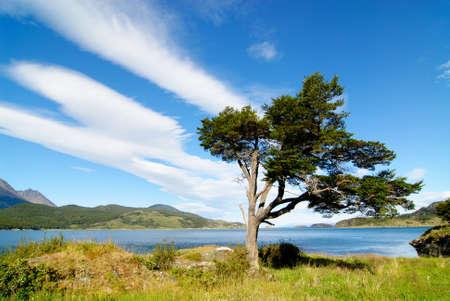 fuego: Parque Nacional Tierra del Fuego