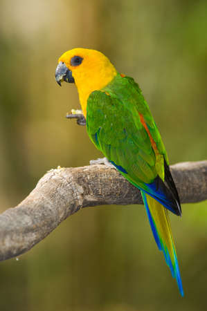 Colorful Parrot photo