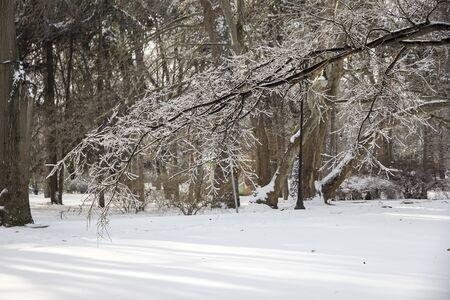 unresponsive: park. Frozen tree branch in winter ice.