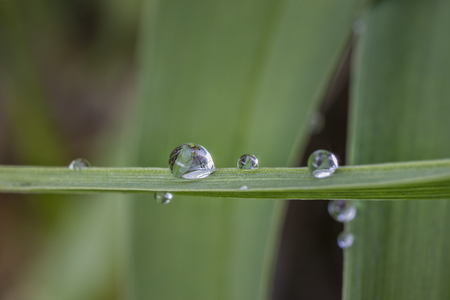 Exciting macro of a drops on a green leaf Stock Photo