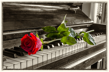 Red rose on the grand piano keys. Vintage view.  Фото со стока