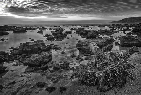 beauty black and white rocky coastline with big wooden root on the b
