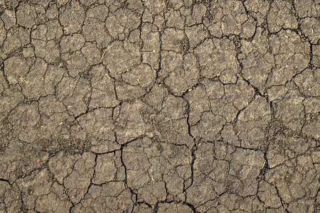 Dry cracked soil texture and background. Grunge soil background. Abstract ground. Natural abstraction. Cracked soil background