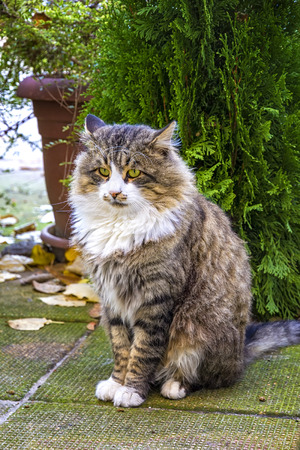 Beautiful fluffy cat sitting in front of a tree in the garden. A photo of ? dignified cat with a deep look.