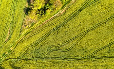 Aerial shot of field with a tractor traces on the agricultural field sowing. Rapeseed field