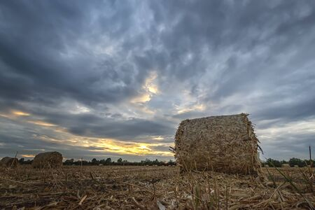 Big bales hay on the field at sunset after harvest