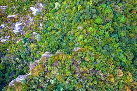 Aerial top-down view of an autumn forest with colorful trees. Beautiful fall scenery.