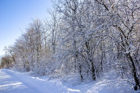 Fairy winter forest in the snow. Winter time. Beautiful winter landscape with snow.