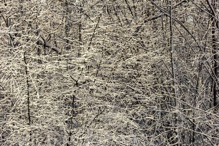 Fairy winter ice forest. Wintertime. Beautiful winter background with ice.