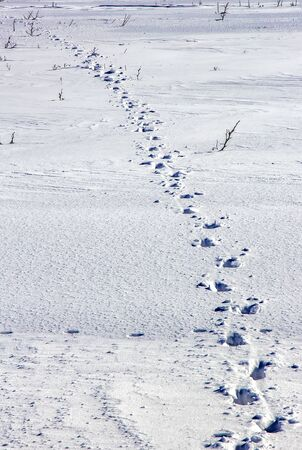 Day view of human traces on snow in the field. Vertical view