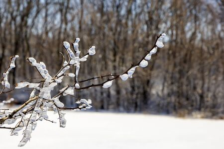 Frozen tree branches in winter ice.