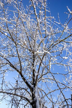 Frozen tree in winter ice at the blue sky. Vertical view