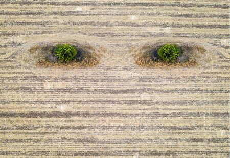 Abstract agriculture composition like earth eyes. Conceptual. Aerial View of harvested Field