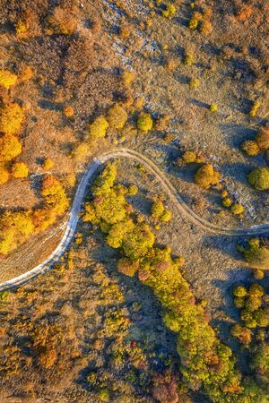 aerial top view from drone of park autumn landscape with trees, colorful lawn, and walking path. Vertical view