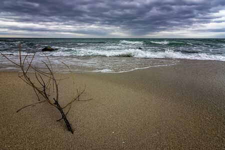 Idyllic seascape with a branch on the shore at cloudy day