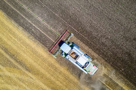 Aerial view drone of harvesting field with combine mows wheat. Harvesting in the fields. Top view