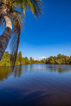 Beautiful view of tropical river and palms. Vertical view