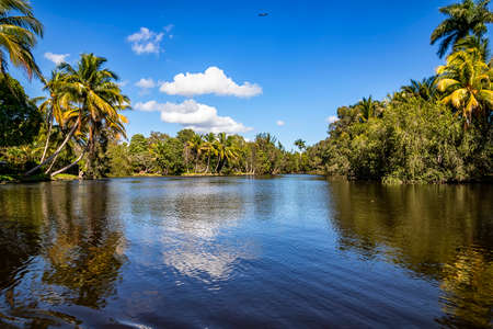 Beautiful recreation view of palms and lake 版權商用圖片